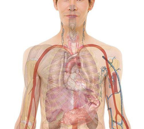 La greffe d'organe